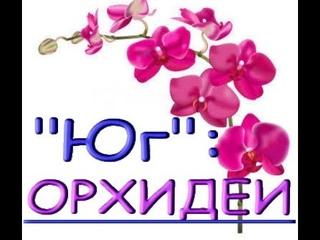 """ЗАВОЗ ОРХИДЕЙ в магазине """"Юг"""",,Самара,ул.Авиационная,8."""