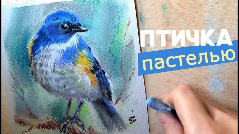Рисую птицу сухой пастелью спидпейнтинг