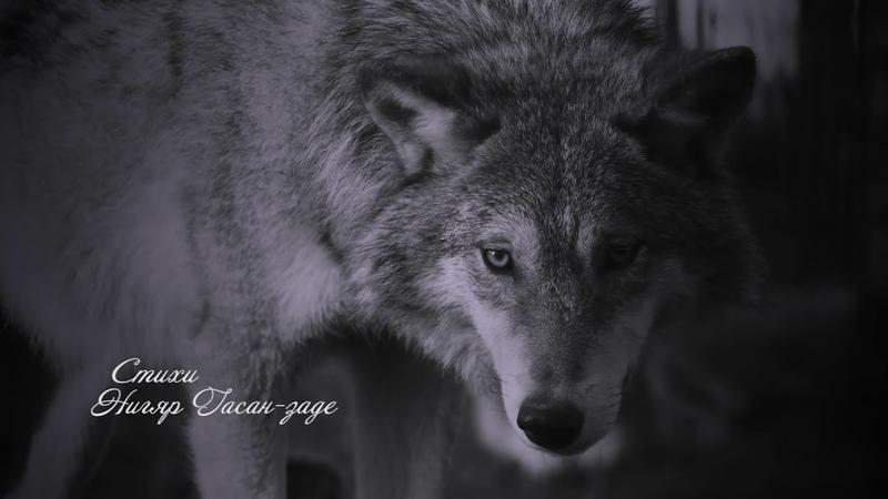 Волк Потрясающий стих ЧИТА YOU