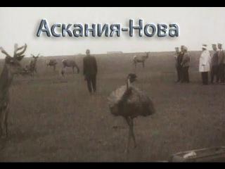 Таврида. Заповедник Аскания-Нова. 1914 год. Визит Николая II в заповедник в апреле 1914 г.