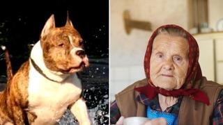 Бабушка подобрала питбуля на улице. Через некоторое время сосед услышал крик от её дома спас собака и герой пес спасла