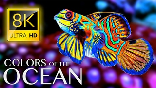 The Colors of the Ocean 8K ULTRA HD - The Best 8K Sea Animals for Relaxation & Calming Music