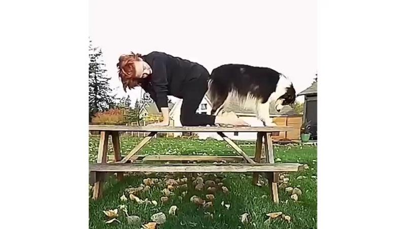 Дога - это йога вместе с собакой