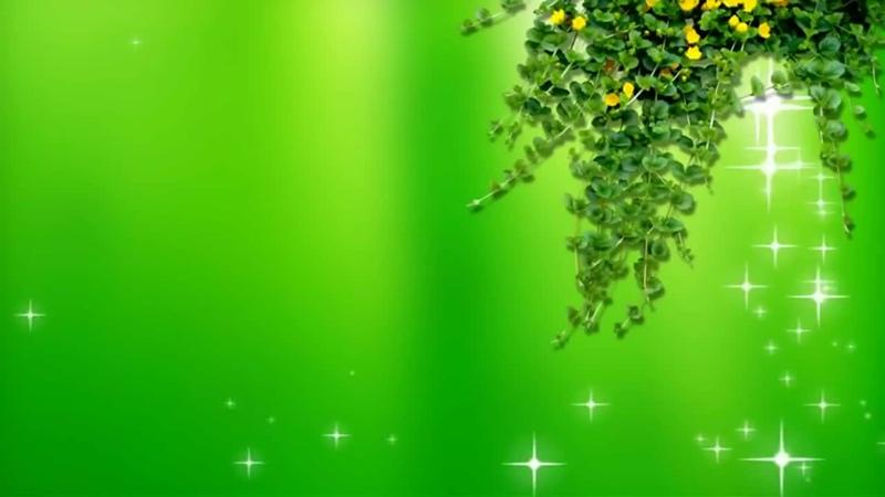 Условия, чтобы фиалки цвели круглый год