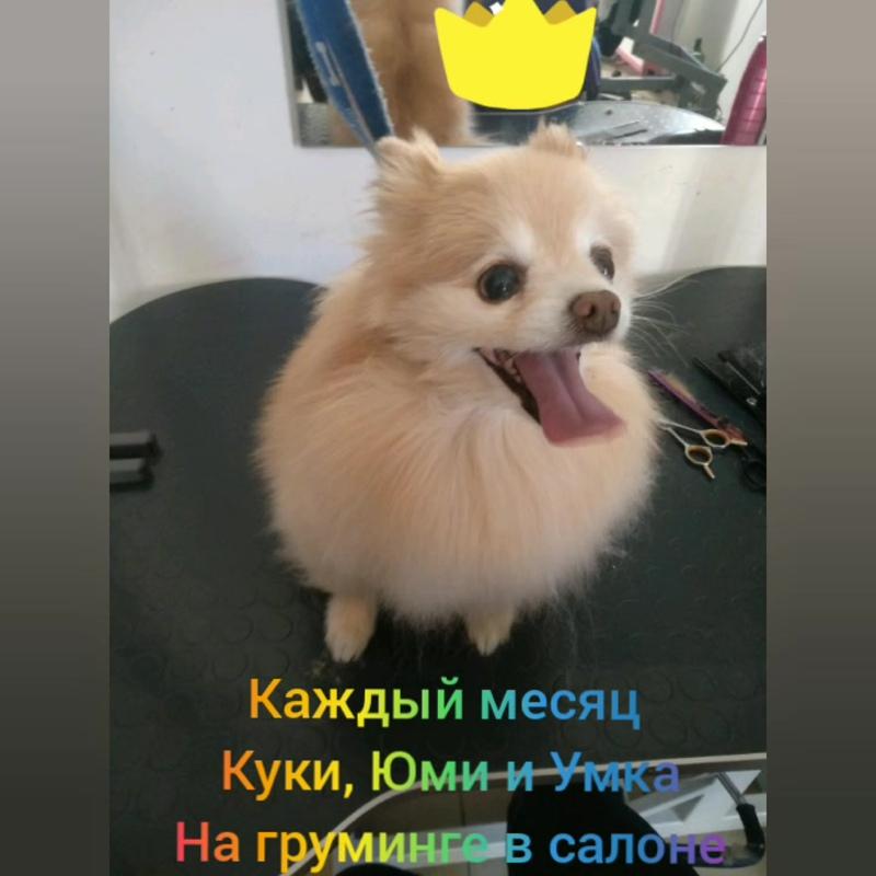 InShot_20191114_111535373.mp4