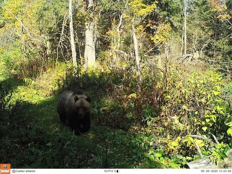 Медведь гуляет по Басегам