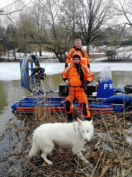 Столичные спасатели за год помогли около 500 живот...