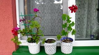 Горшок для комнатных растений // Pot for indoor plants