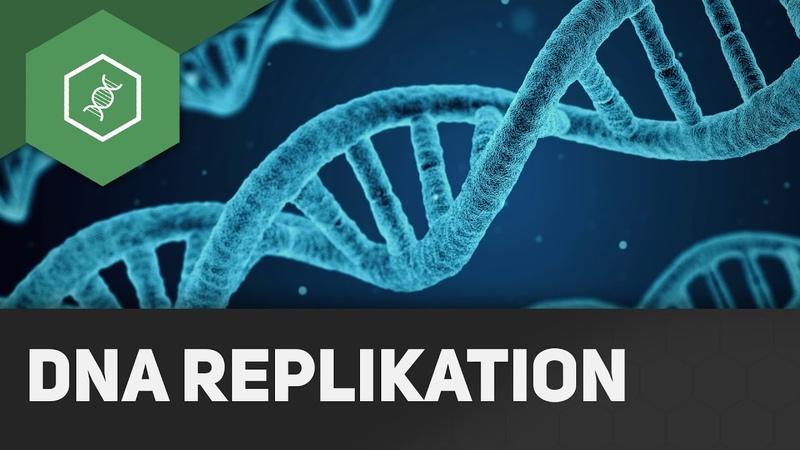 DNA Replikation Wie funktioniert's ● Gehe auf GO werde EinserSchüler